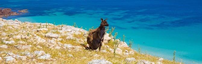 Kangaroo sitting on green and rocky cliff edge
